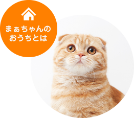 home_sum1